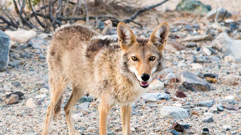 Si imbatte in un animale ferito, pensa sia un cane e lo porta dal veterinario, invece era un animale selvatico pericolosissimo