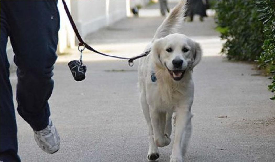 Coppia porta a spasso il suo cane e sotto un albero trova un tesoro milionario