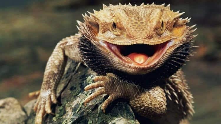 Milano, sfrattato si vendica con il proprietario di casa abbandonando un serpente e un drago