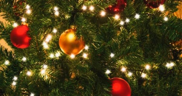 Acquistano un albero di Natale e quando lo portano a casa credono che su ci sia una decorazione ma è tutt'altro