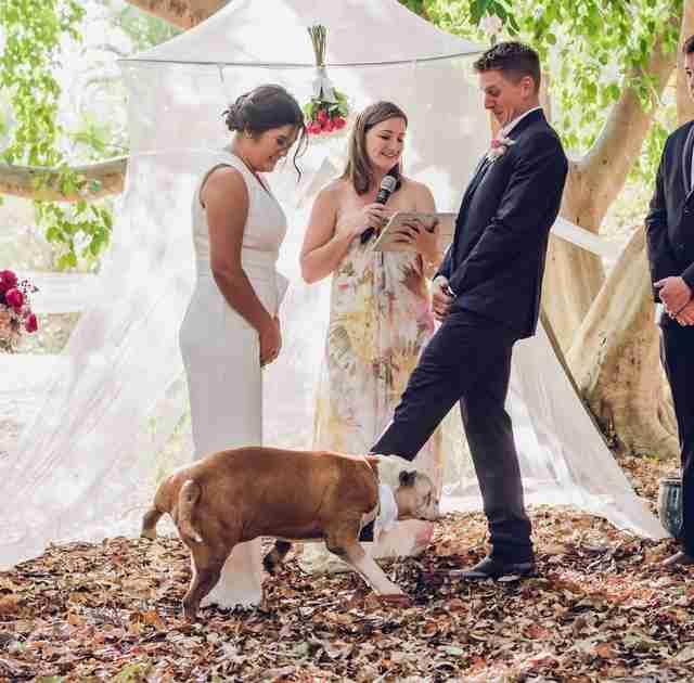 Appena iniziato il matrimonio, il cane dello sposo cattura l'attenzione di tutti e fa la pipì sulla futura moglie