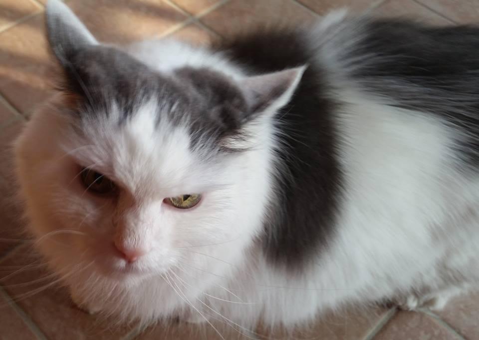 Gatto muore investito da un'auto, la padrona lo seppellisce, ma lui dopo qualche giorno torna a casa