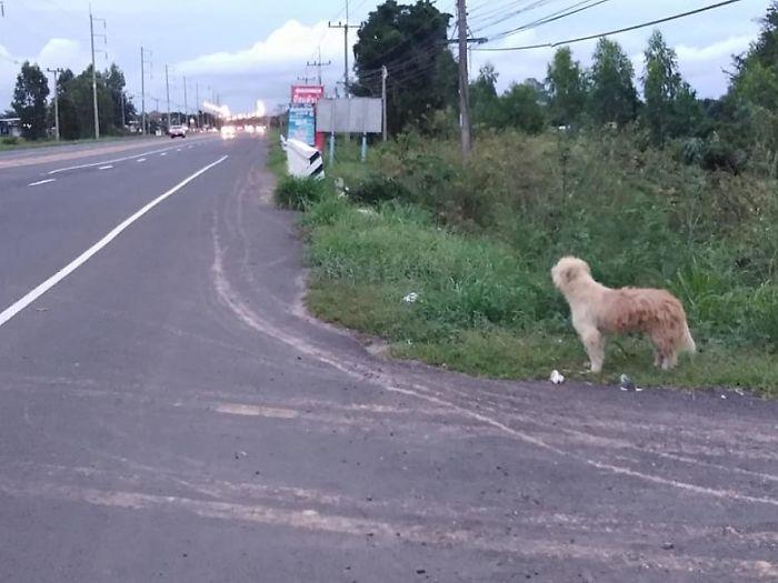 Un cane si perde e rimane per quattro anni sempre nello stesso posto in attesa dei suoi proprietari