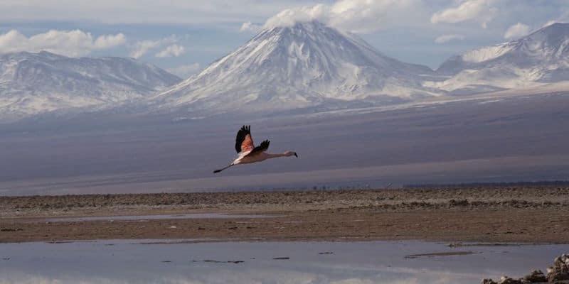 Turista si perde in un deserto senza acqua e cibo riesce a salvarsi grazie una geniale intuizione