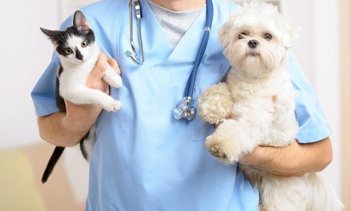 Va dal veterinario con il fidanzato e riesce a dare alla segretaria un biglietto dove c'è scritto, aiutatemi