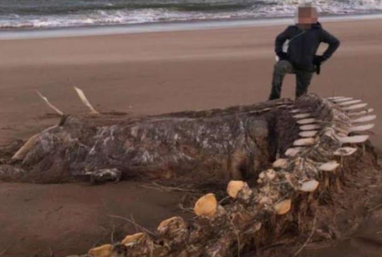 Il mostro di Loch Mess esiste? Dopo la tempesta Ciara riaffiora su una spiaggia in Scozia uno scheletro di una bestia misteriosa