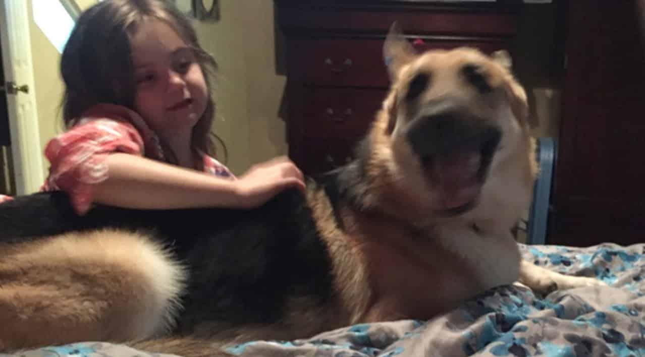 Il cane di famiglia all'improvviso si lancia verso la bambina, i genitori temono la voglia aggredire ma poi capiscono la verità