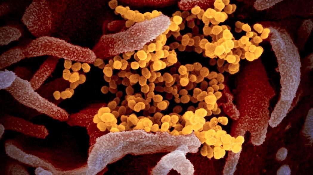 """Emergenza Covid-19, ricercatori vicinissimi al vaccino """"Sarà a gocce. Qualche goccia sotto la lingua, e basta"""""""