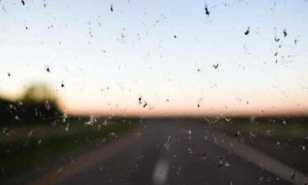 Bari, nell'aria moscerini e ragnetti rossi, invasione senza controllo