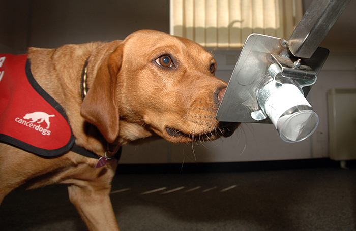 Coronavirus, per scovare i positivi arrivano i cani con il loro fiuto