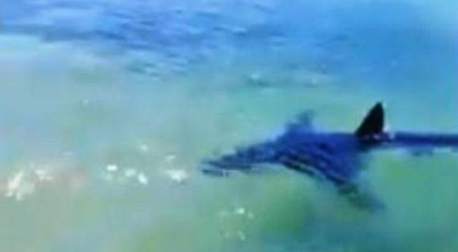Mola di Bari, attimi di terrore per un gruppo di pescatori, incontro ravvicinato con un grosso squalo
