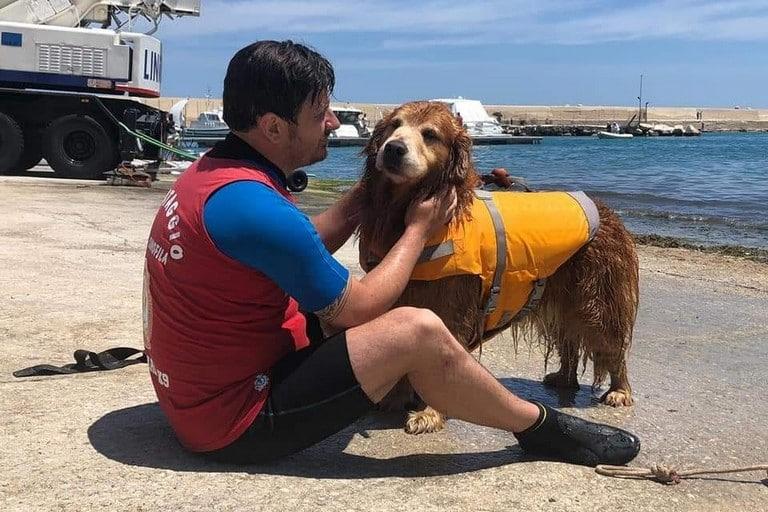 """Bari, l'ultimo toccante saluto a Texas, il cane bagnino che salvò un ragazzino a Pane e Pomodoro, """"piangiamo un essere speciale"""""""
