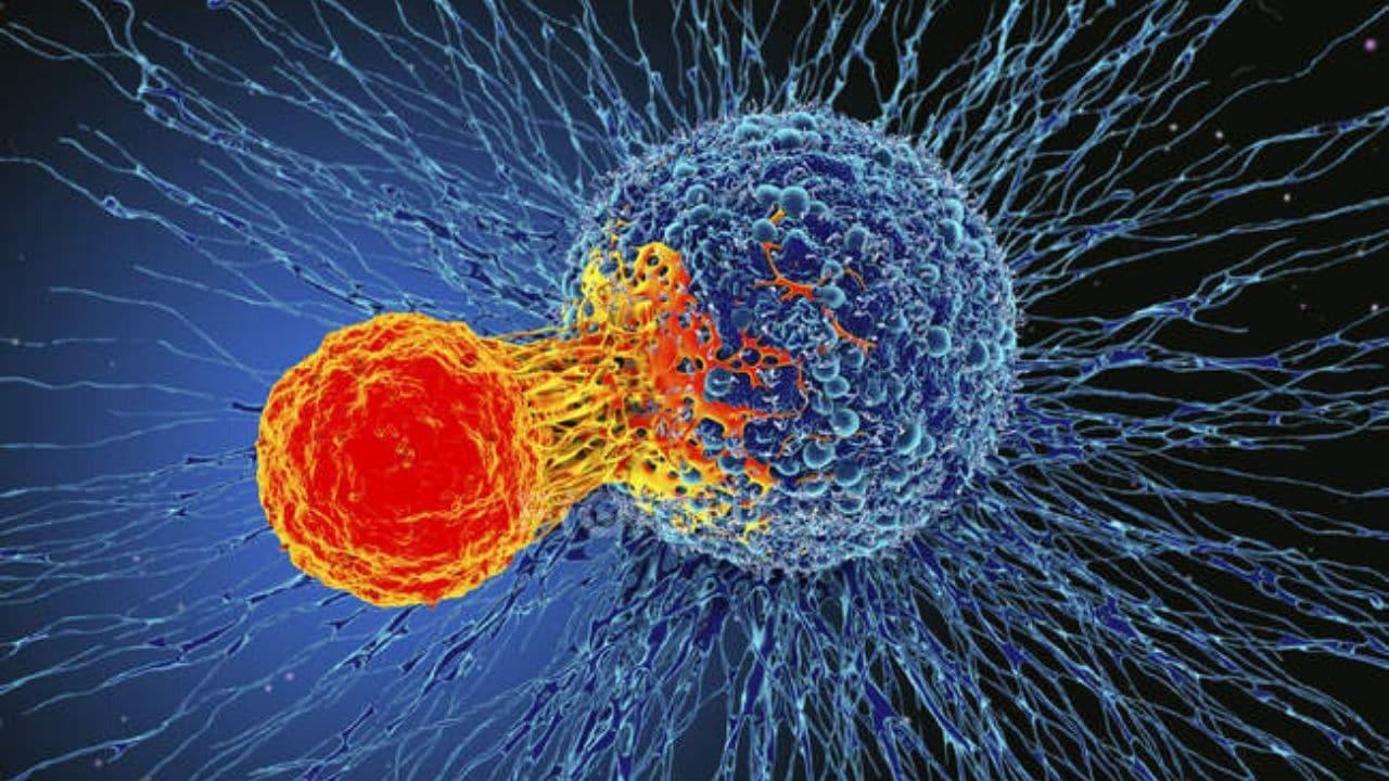 """Italia, il grido dall'allarme degli oncologi, """"a causa del Coronavirus sono un milione e 400 mila pazienti che non hanno potuto sottoporsi a screening"""""""