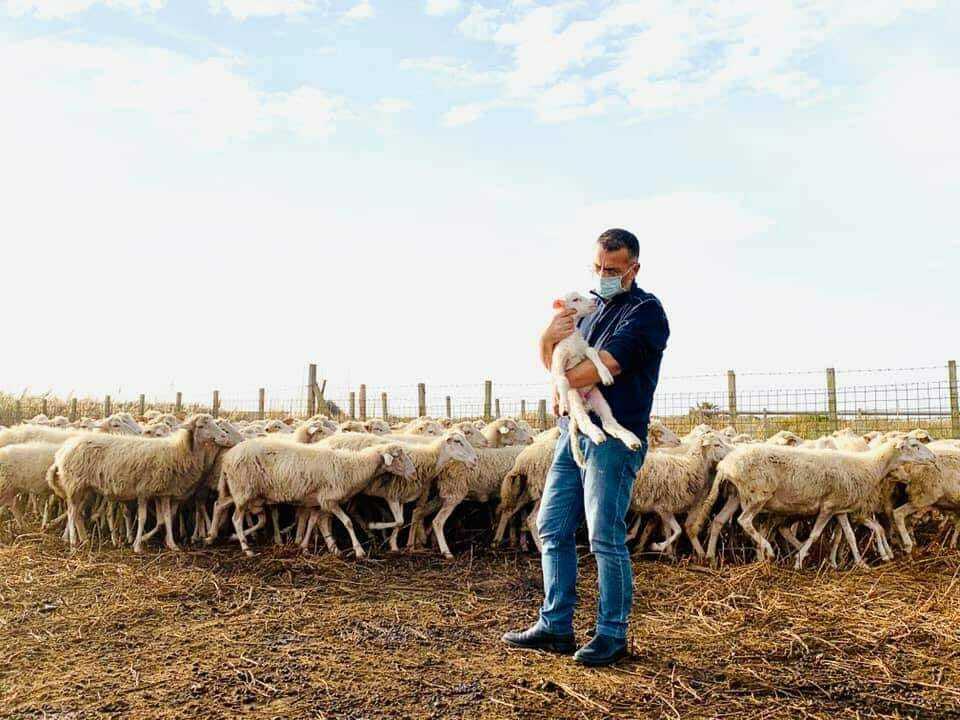 Il pastore risulta contagiato con tutta la sua famiglia, il Sindaco decide di prendersi cura delle sue pecore