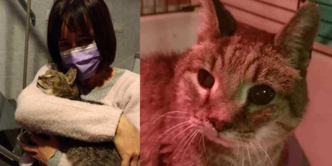 Faenza, musicista ritrova Mandarino, il suo gatto dal pelo rosso sparito 8 anni fa